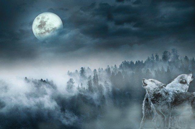 kurtlar-doğa-dağ